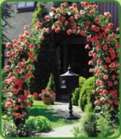 Garden Arch With 2 Cimbing Scarlet Roses