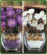 Pair of Crocus Small Glass Cubes