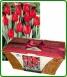 Tulip Presentation Basket